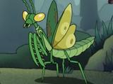 Mantis (Amphibia)
