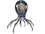 Crabsquid