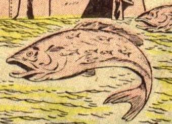 Canal Carp Pilot Fish