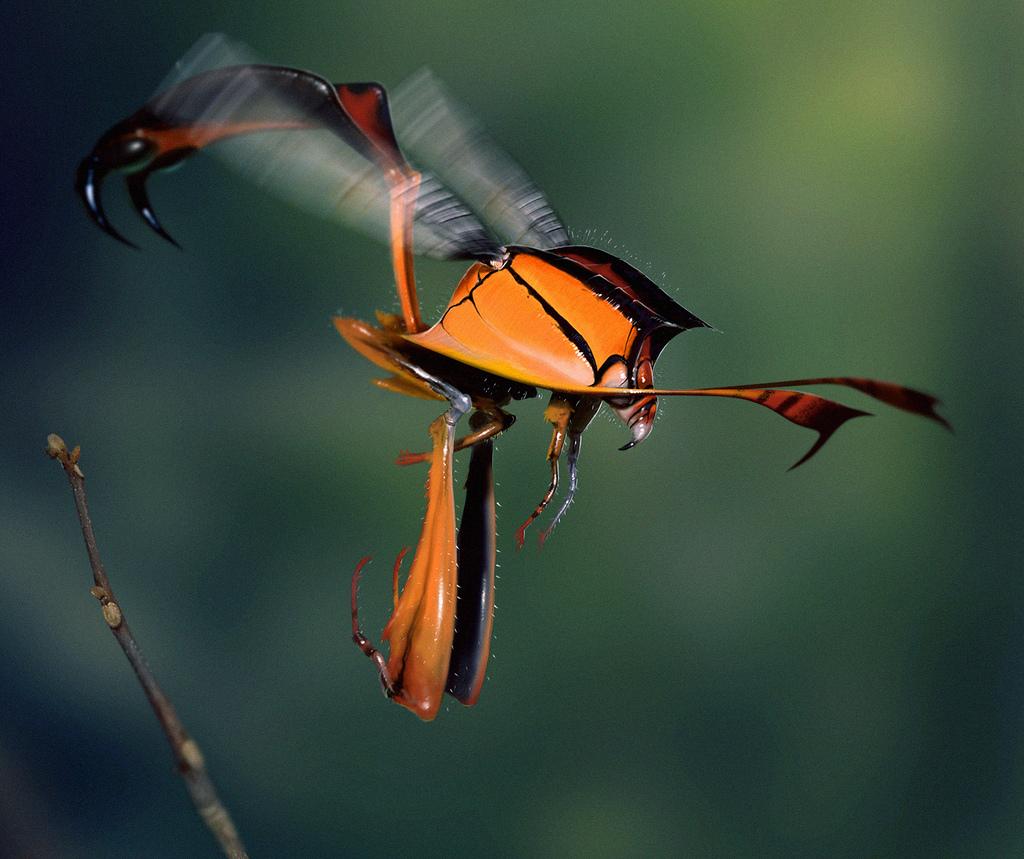 Hellfire Wasp