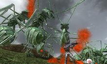 Dark Green Ants.jpg
