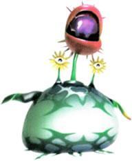 Creeping Chrysanthemum
