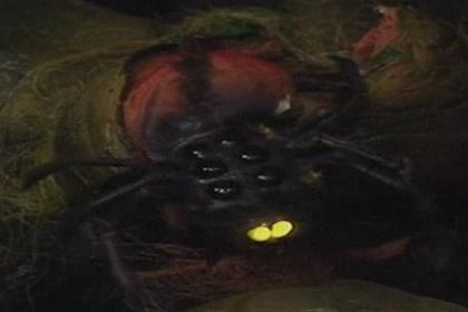 Alzarian Spider