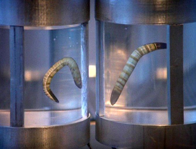 Parasitic Ice Worm