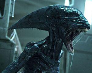 Deacon alien prometheus born.jpg