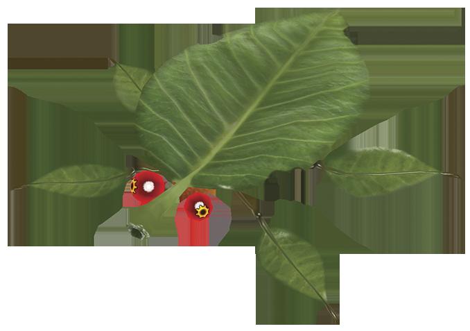 Skitter Leaf