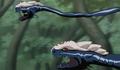 Two-Headed Mutant Snake