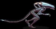 ArachnoidXenomorph