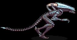 ArachnoidXenomorph.png