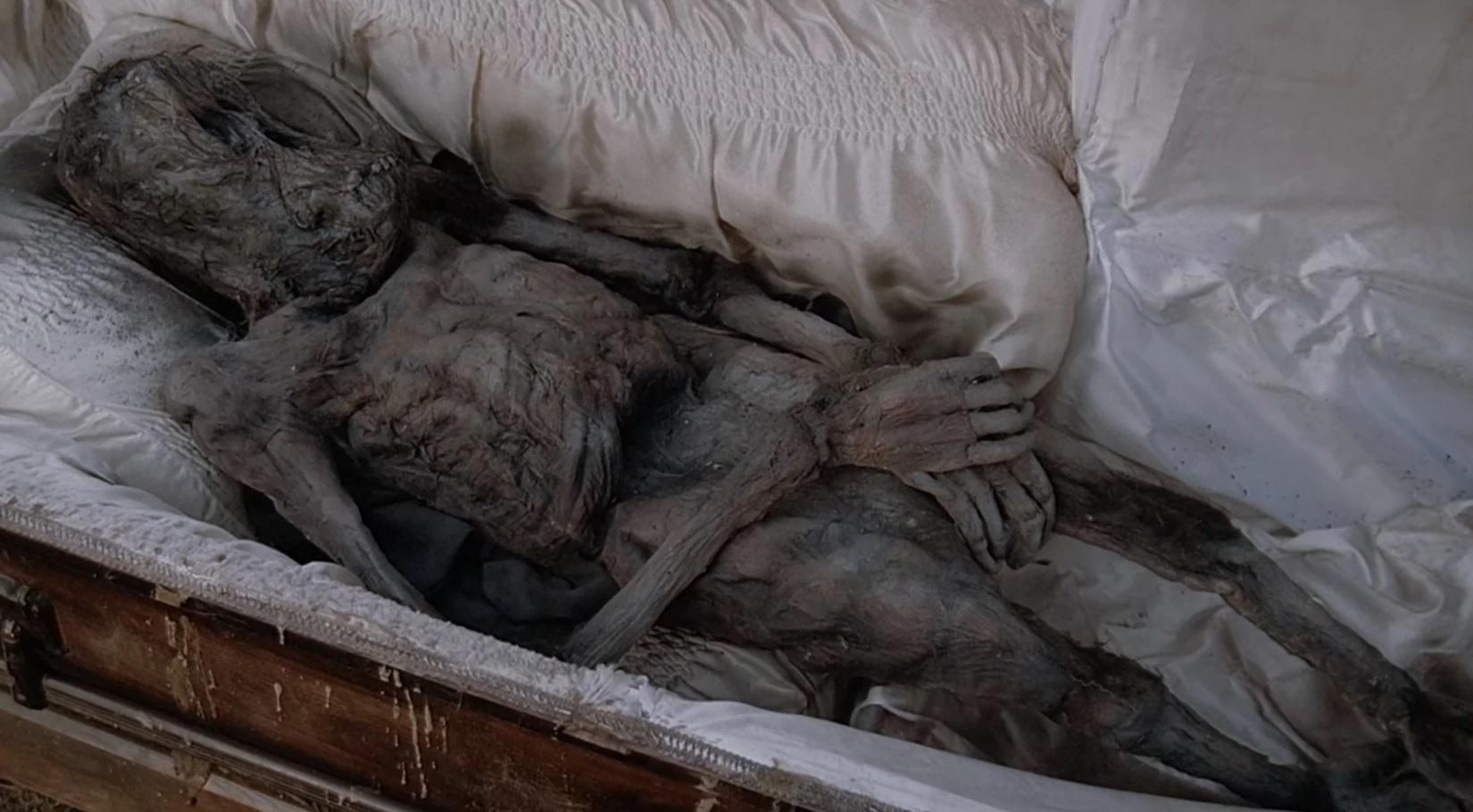 Mammalian corpse