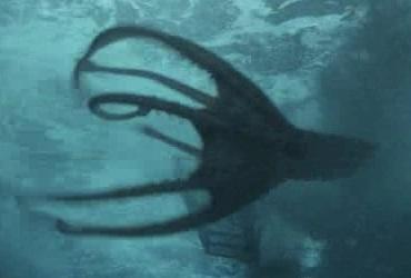 Vampire Squid (Sanctuary)