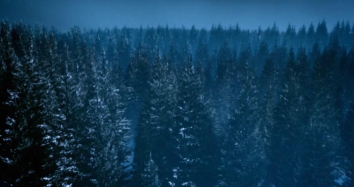 Androzani Pine Tree