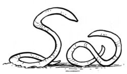 Ylesian White Worms.jpg
