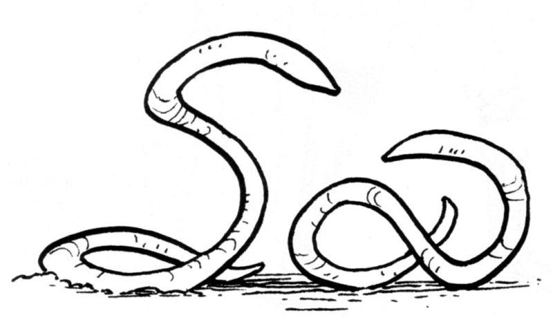 Ylesian White Worm