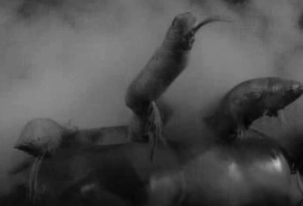 Preplanis Soil Parasite