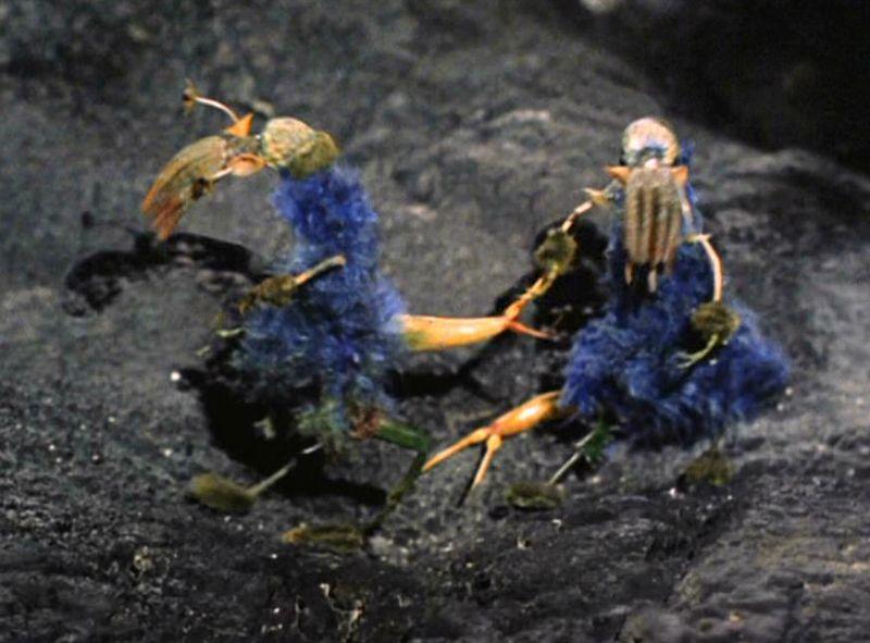 Ornithoid Lifeform