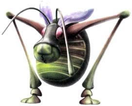 Antenna Beetle