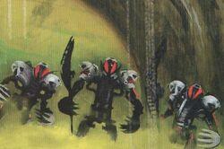 Makuta species.jpg