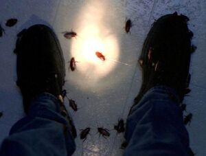 Roaches-XFiles.jpg