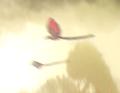Felucian Birds