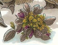 Lahdia Plant.jpg