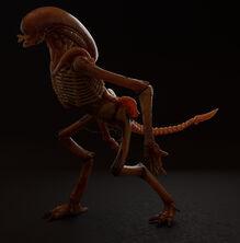 Chestburster Runner Alien 2