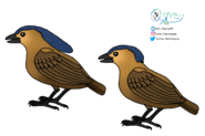 Butler's Bowerbird