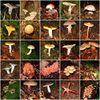 Mushroom collage.jpg