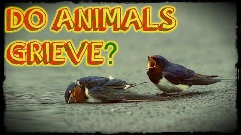 Do Animals Grieve?