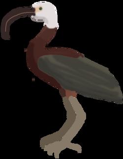 Long-billed Ibis.png