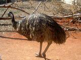 List of Australian bird emblems