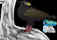 Cat-eyed Eagle on Stubbill