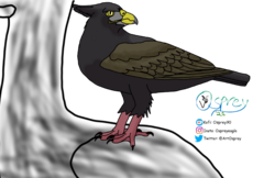 Cat-eyed Eagle on Stubbill.png