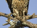 List of birds of Kenya