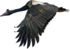 Magpie Goose.png