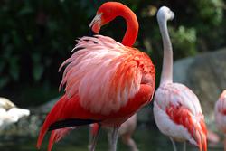 Lightmatter flamingo.png