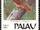 Palau Owl