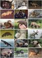 Mammal Diversity 2011.png