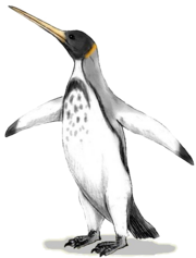 Icadyptes BW.png