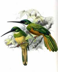 Green-tailed Jacamar.png