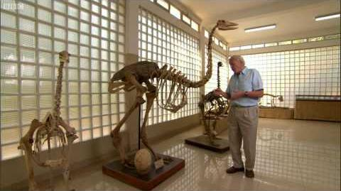 How tall was the Elephant Bird? - AttenboroughWeek - Attenborough and the Giant Egg - BBC-3