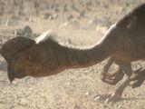 Citipati (Dinosaur)