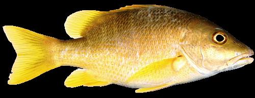 A boring fish,