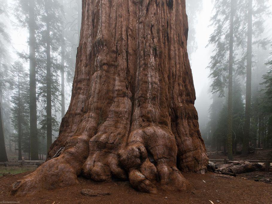 Sequoiaverse