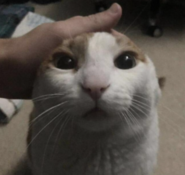 Me petting my cat