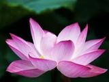Interversal Structure Flower