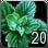 Allods herb mint.png