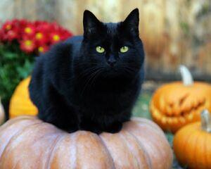 Black-Cat-random-32500173-1280-1024.jpg