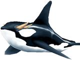 Orca (Warcraft)