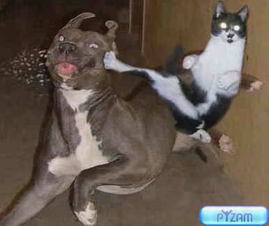 Dogcatfight 5092.jpg